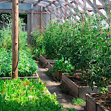 OUR Ecovillage Permaculture Garden - Green house