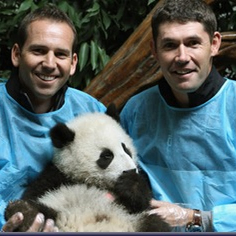 Padraig Harrington Helps Deliver Sergio's Panda- So That's What Was Up His Ass!