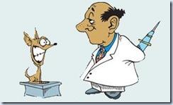 veterinario01