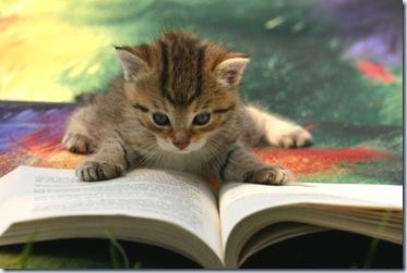 gattino libro