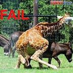 una-jirafa-con-problemas.jpg