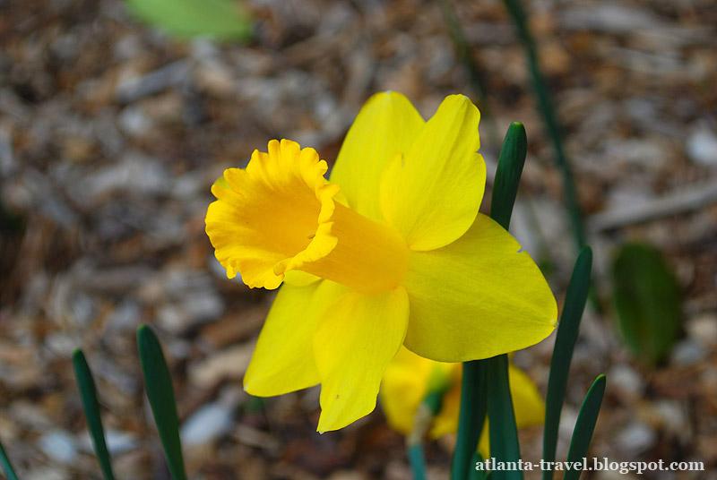 Весенние цветы в садах Коллавэй Callaway Gardens spring flowers