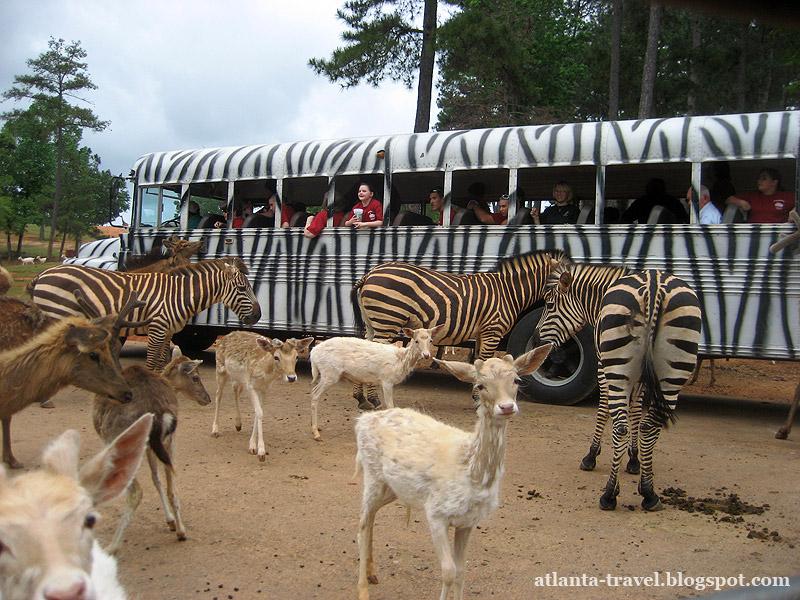 Парк сафари диких животных Wild Animal Safari