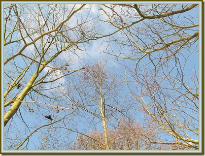 Trees, with crow, in Wythenshawe Park