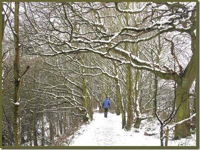 The tree lined path throughCulcheth Linear Park