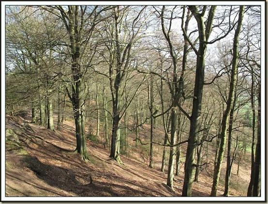 Sunlit tree on Alderley Edge
