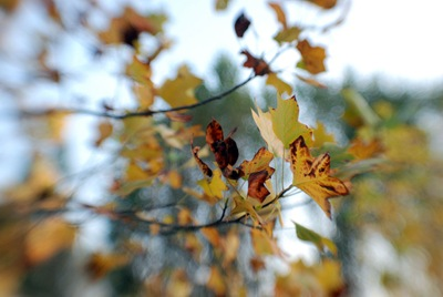lensbaby albero