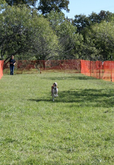 Max Lure Coursing