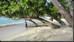 spiaggia di las cabanas (29)