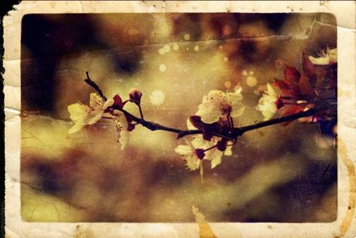 Primavera con una esquina rota