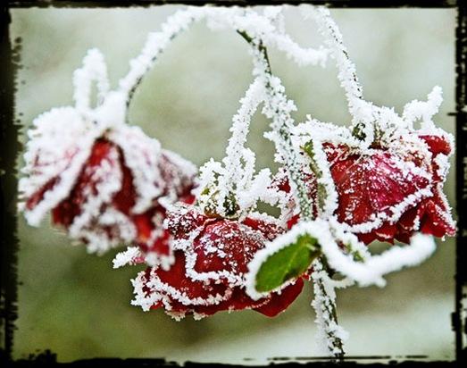 nieve y flores