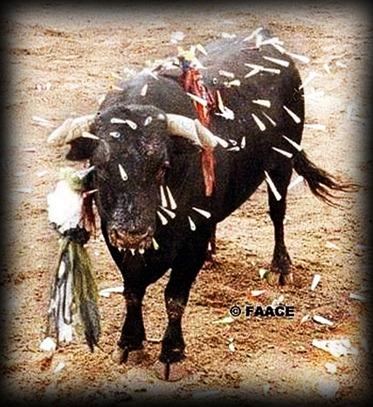 toro de coria