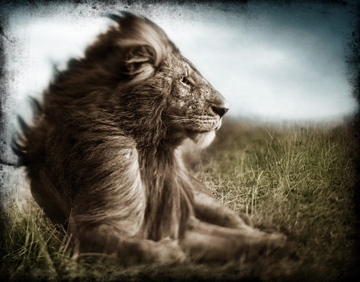 leon tormenta