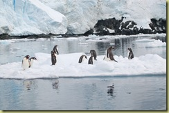 Penguins on Iceflow