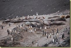 Elephant Seals (2)
