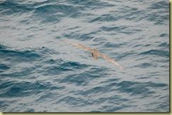 Southern Ocean (1)