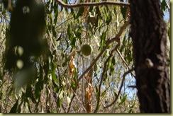 Cricket  Ball Tree
