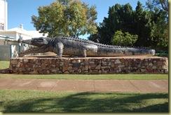 Krys the Crocodile