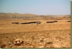 Bedouin Encampment Adj