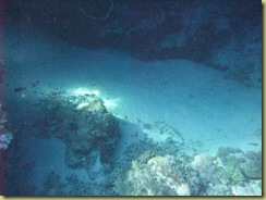 Grouper camoflauged