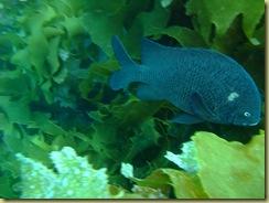 Fish 3 in krlp