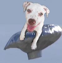 balloon boy dog