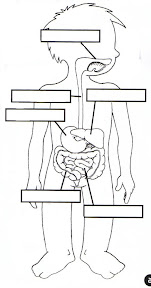 digestivo.jpg