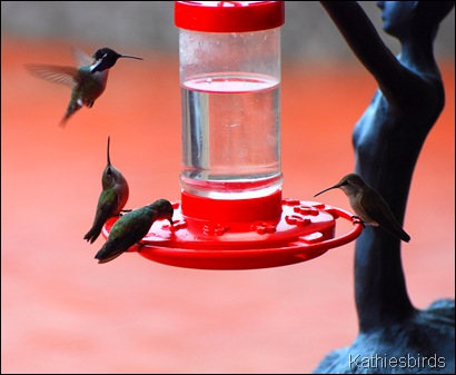 Winter Hummingbirds