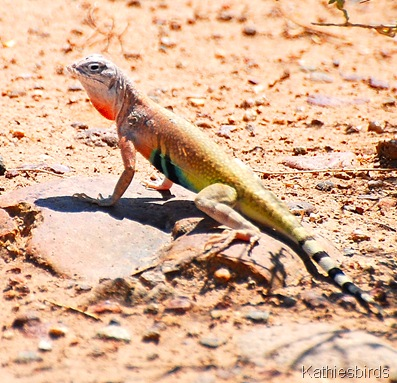 6. lizard
