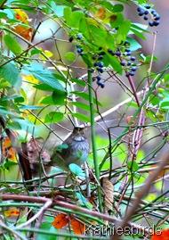 2. WT sparrow