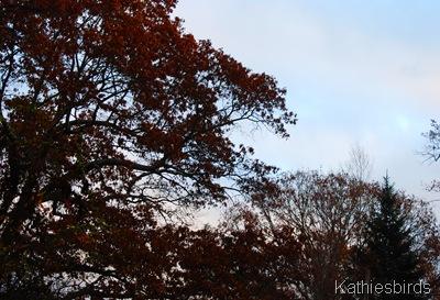 4. brightening sky