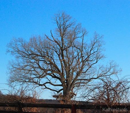 4. Eagle Tree k