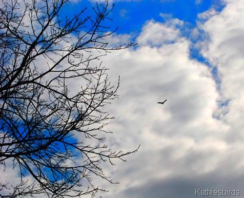 7. Vulture sky