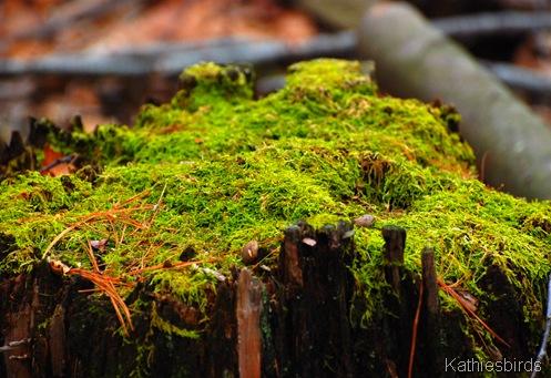 9. Moss_kathiesbirds