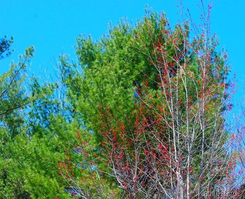 5. Spring buds-kab