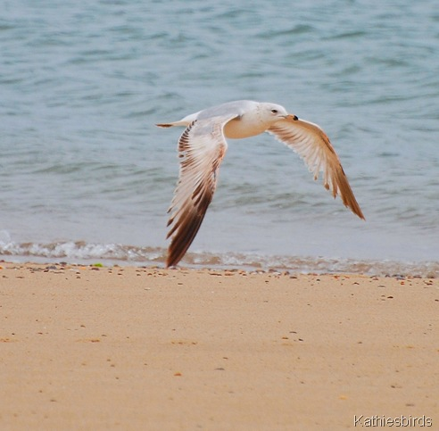 6. gull-kab