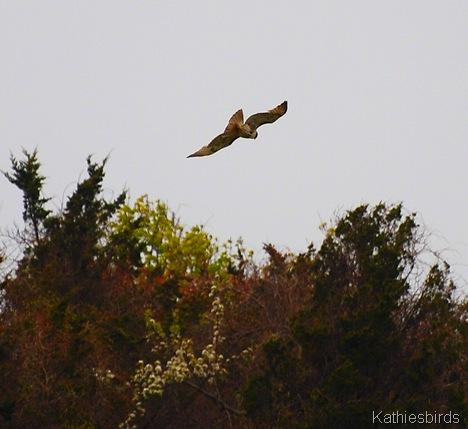 31. flyaway-kab