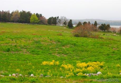 16. pasture n marsh-kab