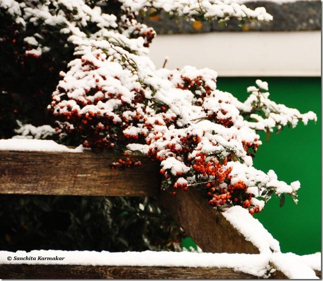 Snow_485
