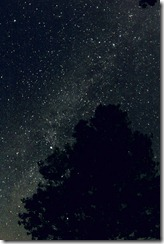 MilkyWay_behind_Tree