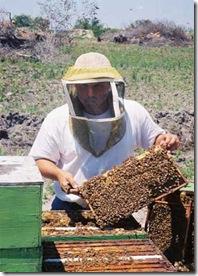 beekeeping - تربية النحل