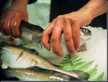 peixe-m-20091201