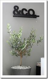 Olivträd2