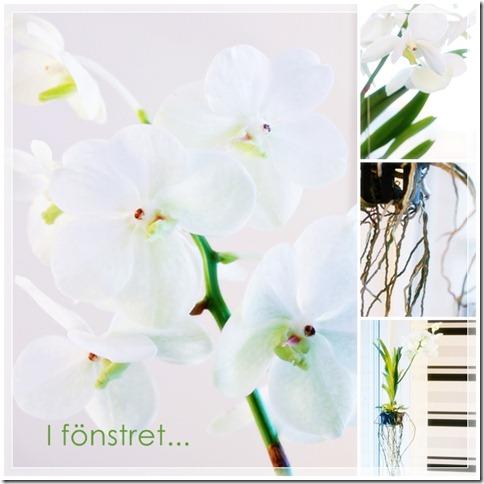 Orkide kollage