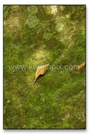 TMKH_037_thommankuth_kerala_keralapix.com_DSC0227