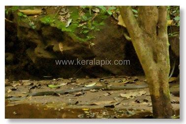 TMKH_041_thommankuth_kerala_keralapix.com_DSC0064