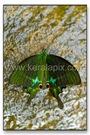 TMKH_054_thommankuth_kerala_keralapix.com_DSC0093