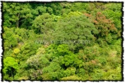 NLPY_002_www.keralapix.com_DSC0030