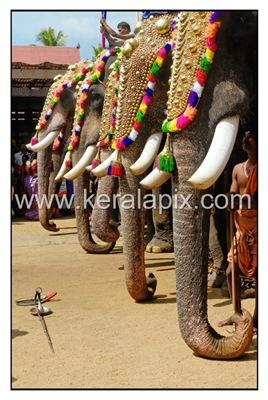 TPRA_038_DSC0199_www.keralapix.com_kerala