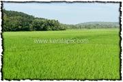 PLKD_004_www.keralapix.com_DSC0006